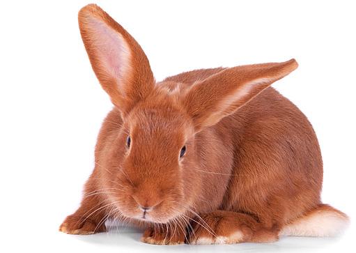 Pro králíky