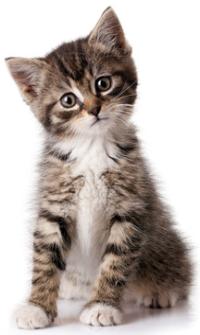 Krmivo pro koťata a kojící kočky