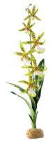 Rostlina EXO TERRA Spider Orchid 45cm