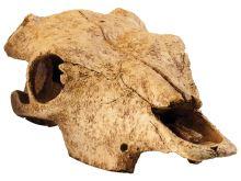 Dekorace EXO TERRA bůvolí lebka 23,5x13x7cm